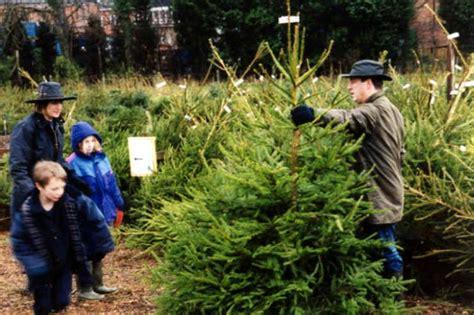 christmas tree farm amersham