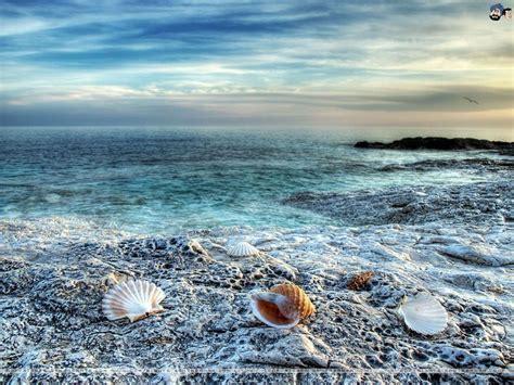 Sea Shells Wallpapers  Wallpaper Cave