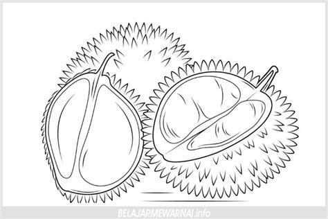 gambar mewarnai tiga buah durian belajarmewarnai info