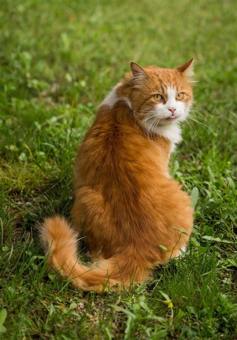 katzenschreck katzensicherer garten zutritt den katzen