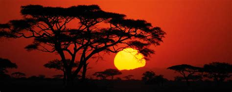 Expert Guide On Serengeti National Park In Northern ...
