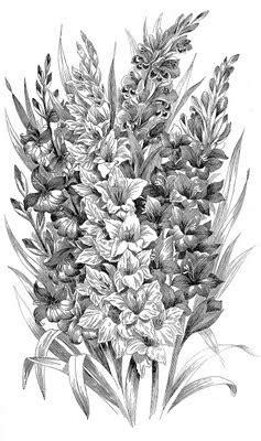 Vintage Clip Art - Black and White Gladiolus -Engraving