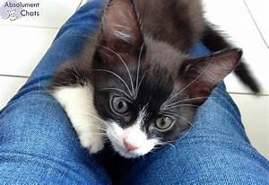Laver Un Chaton : bien duquer un chaton demande de la discipline de la ~ Nature-et-papiers.com Idées de Décoration