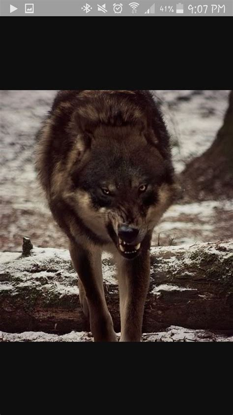 The Werewolf's Mate - Kapitel 21 - Wattpad