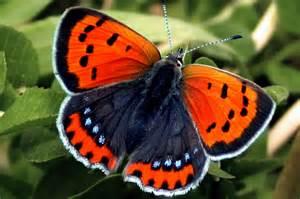 Most Beautiful Orange Butterfly