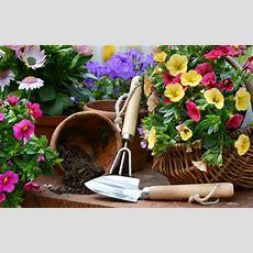 The Art Of Sustainable Gardening