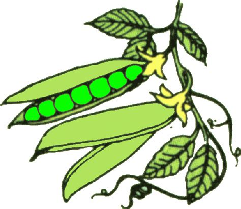Green Beans Clipart Green Beans Clipart Clipart Best