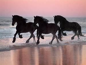 17 Best images about Horses in sunset on Pinterest ...
