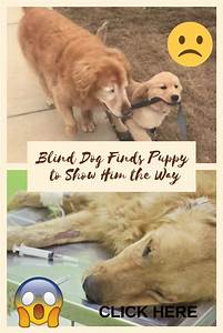 Blind, Dog, Finds, Puppy, To, Show, Him, The, Way, Omg, Bizzarre, Weird, Wtf, Lol, Funny, Hilarious
