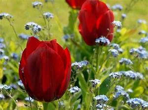 Ab Wann Erdbeeren Pflanzen : tulpenzwiebeln pflanzen wann tulpenzwiebeln im herbst pflanzen blumenzwiebeln richtig stecken ~ Eleganceandgraceweddings.com Haus und Dekorationen