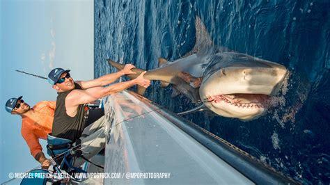 blacktiph shark fishing   york mets pitchers