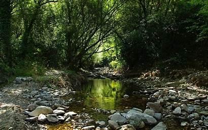 Stream Forest Wallpapers 4k Rivulet Streams 1440
