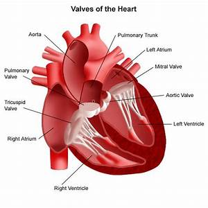 Heart Valve Repair And Replacement  Expert Care