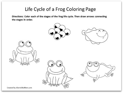 Cycle Of A Frog Coloring Page Frog Coloring Pages And Learning Activities