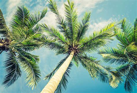 shop vintage beautiful tropical palm tree wallpaper