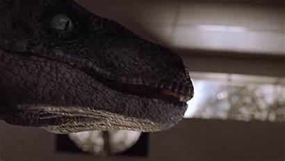 Jurassic Park Velociraptors Jp Velociraptor Lost Raptor