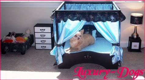 chambre pour chien une chambre pour vos babydogs luxury dogs
