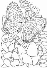 Coloring Adults Pages Butterfly sketch template