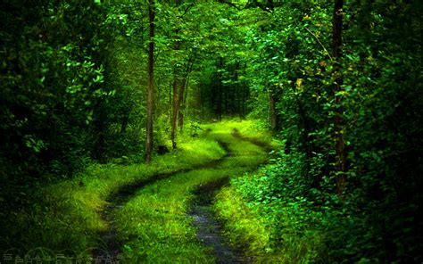 green forest wallpaper beautiful green forest path Beautiful