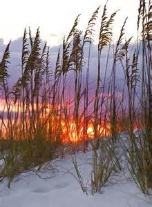 Sea Oats Destin Florida