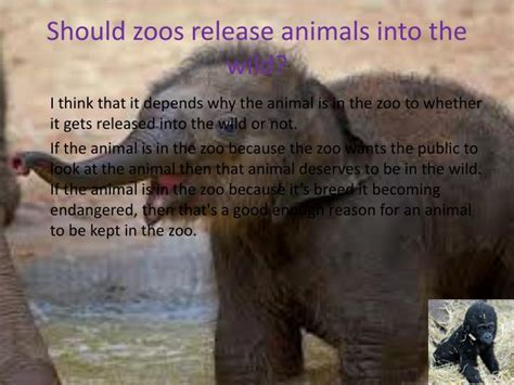 zoos should animals wild cons pros into kept why zoo animal release released ppt powerpoint presentation depends whether gets think