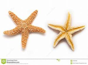Sea star isolated stock photo. Image of star, beach, life ...