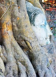 Wurzeln Im Kopf Berechnen : buddha kopf in wurzeln stock foto colourbox ~ Themetempest.com Abrechnung