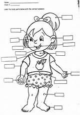 Drawing Organs Human Clipart Getdrawings sketch template