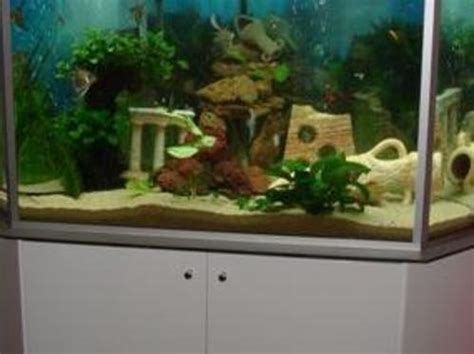 aquarium tortue d eau douce comment bien d 233 marrer un aquarium d eau douce
