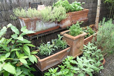 planter des herbes aromatiques en pot cultiver les herbes aromatiques en pots