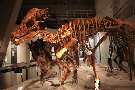 pachycephalosaurus wikipedia