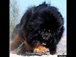 Caucasian Russian Shepherd Dog (Bear Dog) | CAUCASIAN ...