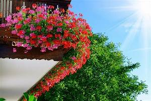 Blumen Gießen Mondkalender 2017 : die 11 sch nsten balkonpflanzen ~ Lizthompson.info Haus und Dekorationen