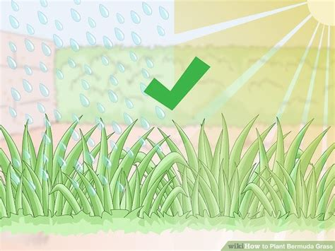 How To Plant Bermuda Grass