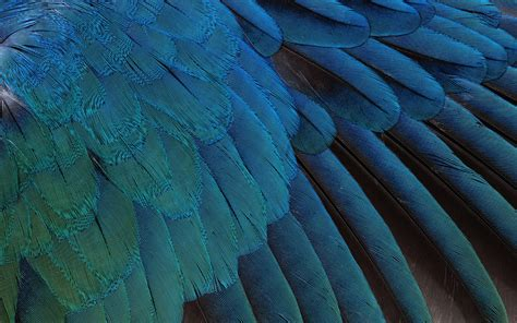 1000+ Images About Feathers On Pinterest