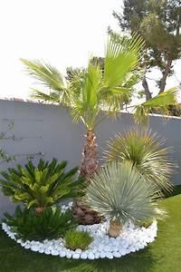 les 25 meilleures idees de la categorie jardin exotique With amenagement petit jardin avec piscine 9 album olivier et palmier arbor mineral paysagiste