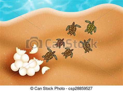 sea turtle eggs royalty  drawing csp