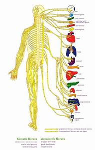 To The  The O U0026 39 Jays And Nervous System On Pinterest