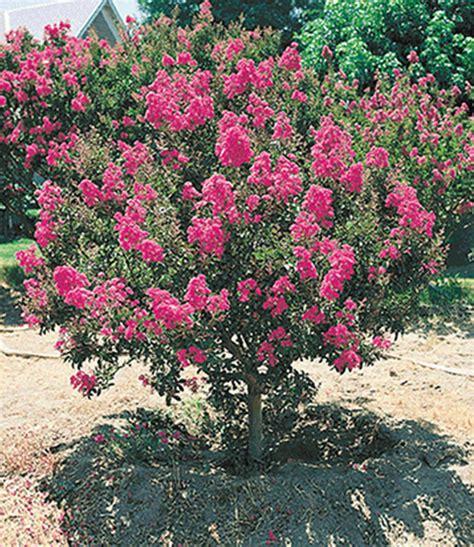 Lange Blühende Pflanzen by Bl 252 Ten Str 228 Ucher Kollektion Bl 252 Hende Str 228 Ucher Bei