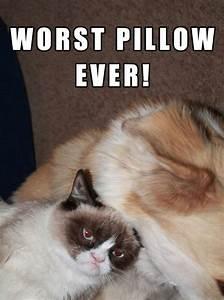 Grumpy's trying to sleep | Fun Memes | Pinterest | Cats ...