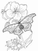 Coloring Butterfly Pages Printable Colouring Childrens Printables Am sketch template