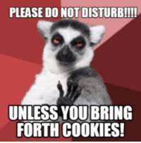 25+ Best Do Not Disturb Meme Memes   Cooking Up Memes ...