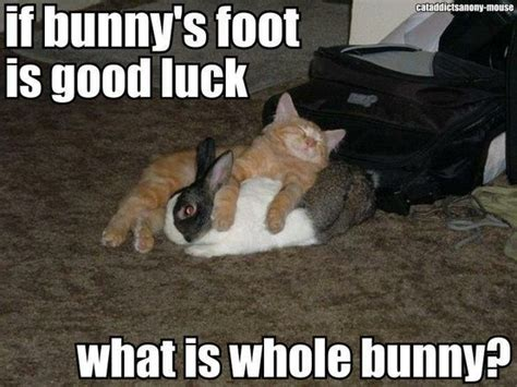 Funny Good Luck Meme - good luck bunny animal cuteness pinterest