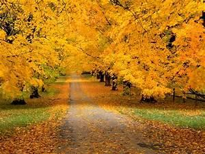 wallpaper zh: autumn wallpaper