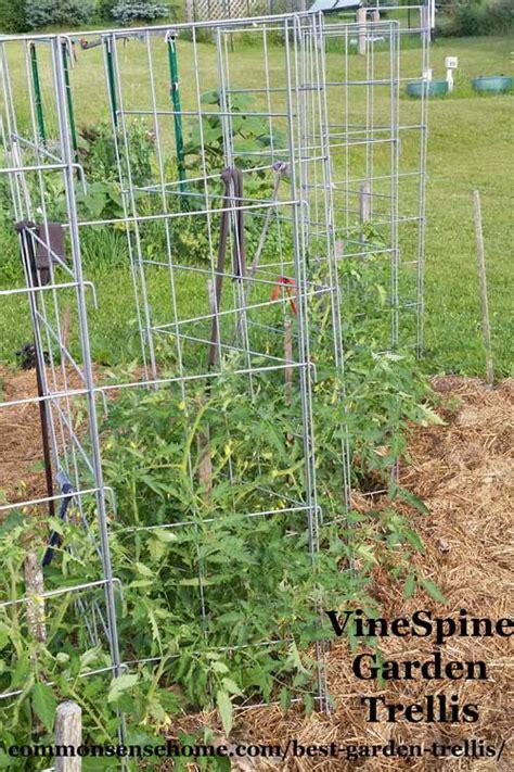 5+ Terrific Tomato Trellis Ideas For Easier Picking And