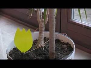 Kleine Fliegen In Der Blumenerde : kleine fliegen trauerm cken in blumenerde nat rliche ~ Lizthompson.info Haus und Dekorationen