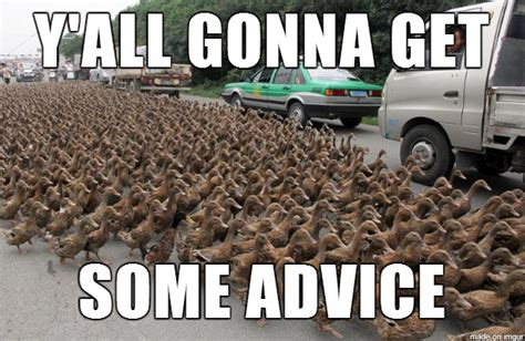 Advice Meme - advice duck meme www imgkid com the image kid has it