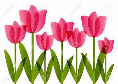 Tulip Border Clipart Tulips Clip Corner Clipground