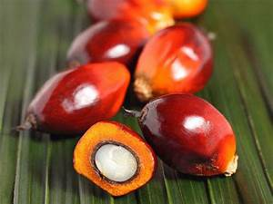 Agroforestry Design Monsanto Natura Taste The True Cost Of Palm Oil And