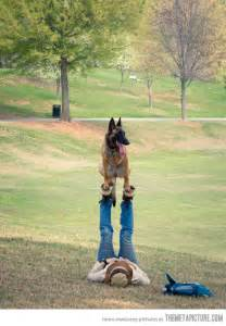 Air Flying Dog Funny